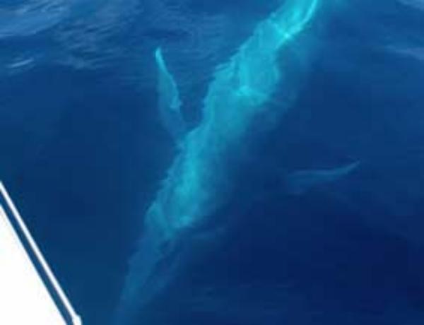 portland whale1